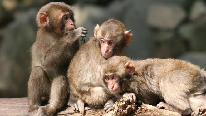 타카사키야마 자연동물원