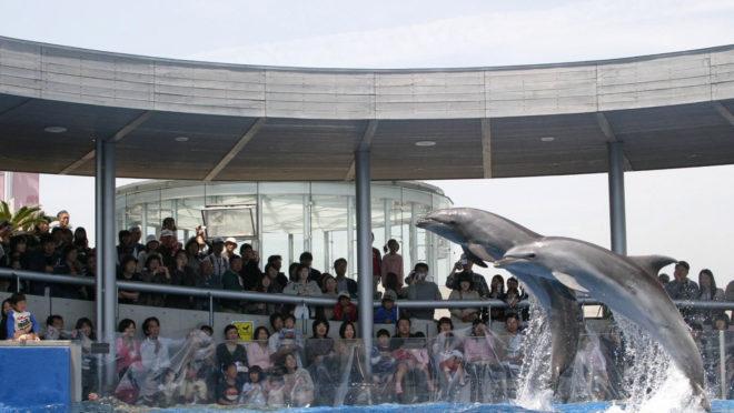 大分海洋宫殿水族馆 海卵